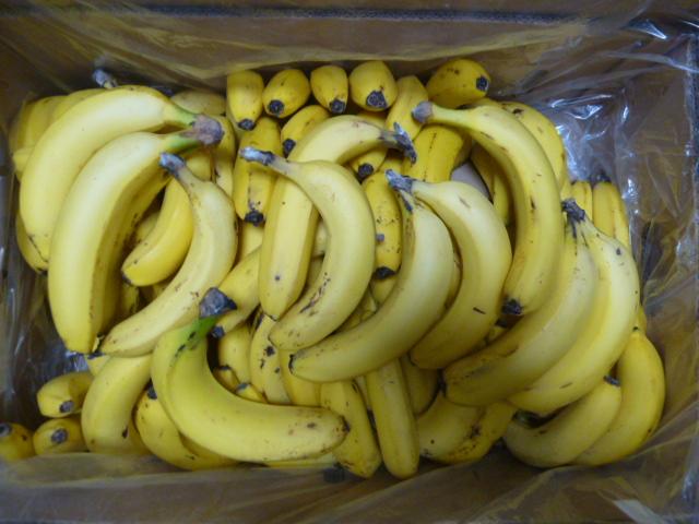 訳ありバナナ14kg全部で91本