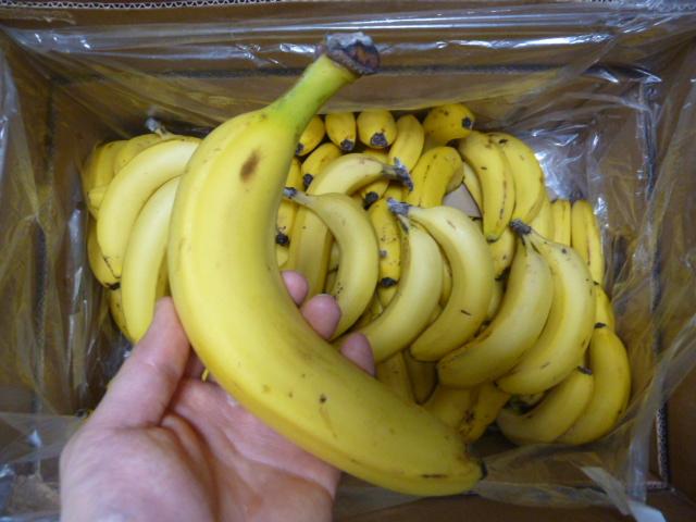 訳ありバナナ14kg1本食べてみた